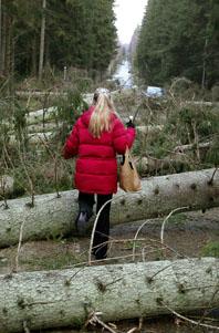 Så här ser det ut på många platser i södra Sverige. Stora träd som blockerar vägarna. Foto: Lennart Rehnman/PrB