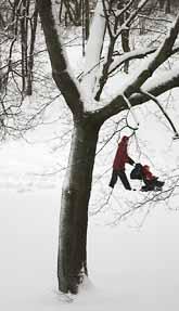 Snön vräkte ner över södra Sverige i helgen. Roligt för pulkaåkare och skidåkare, men besvärligt för bilisterna. Foto: Ulrika Åling/8 SIDOR