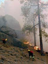 Brandmännen försöker stoppa skogsbränderna på Kanarieöarna. Foto: Sergio Perez/Scanpix