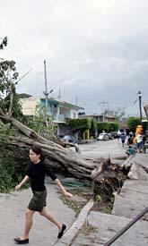 I Poza Rica i Mexiko har träd och hus blåst omkull efter ovädret. Foto: Alexandre Meneghini/Scanpix