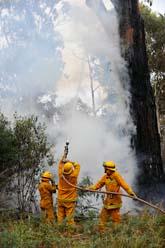 Brandmän försöker släcka en brand nära staden Melbourne i går, söndag. Foto: AP HOTO/SCANPIX.