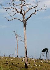 Jorden blir varmare. Vilket ökar risk för torka. Foto: Andre Penner/AP Photo