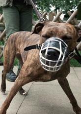 Många svenskar blir bitna av ilskna hundar. Foto: Christof Stache/Scanpix