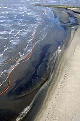 Oljan har flutit in på stränderna i södra USA. Foto: Liz Condo/Scanpix