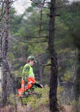 Hela helgen har folk sökt efter den försvunna flickan i Svenljunga. Foto: Adam Ihse/Scanpix