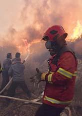 Det brinner i skogen i norra Israel. Foto: Scanpix