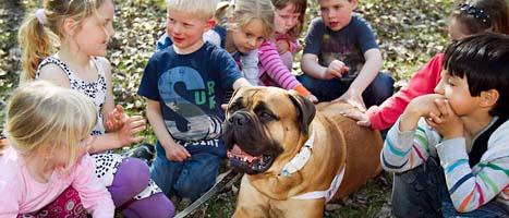 Små barn mår bra av att umgås med katter och hundar. Foto: Heiko Junge/Scanpix