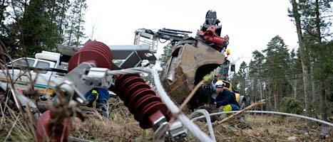 Stormarna i Sverige har ställt till med stora problem. Förutom nedfallna träd och skador på el-ledningar så är det också brist på skaldjur inför nyårsafton. FOTO: Janerik Henriksson/SCANPIX