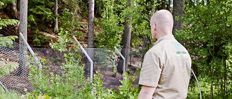 Varghagen i Kolmårdens Djurpark. Här dödades en djurskötare på söndagen. Hon blev ihjälbiten av vargarna. Foto: Henrik Witt/Scanpix