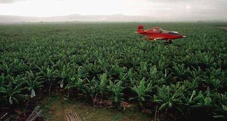 En bananodling i Honduras sprutas med gift från ett flygplan. Gifterna ska bland annat stoppa insekter från att förstöra bananerna. Foto: Esteban Felix/Scanpix