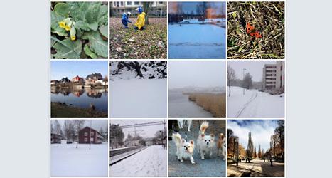 8 Sidors vänner på Facebook har skickat in bilder på våren.