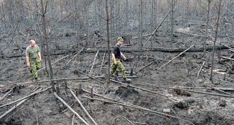 En del av skog som brunnit i Västmanland. Flera mil skog är förstörd. Foto: Maja Suslin /TT