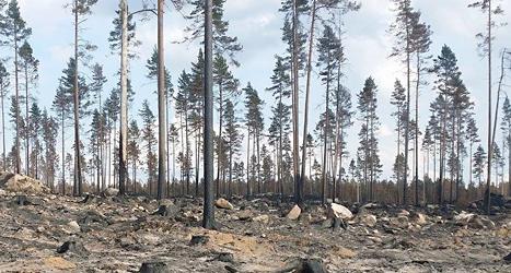 Så här ser skogen ut efter branden i närheten av Finspång. Foto: Tobias Andersson/Räddningstjänsten Finspång/TT