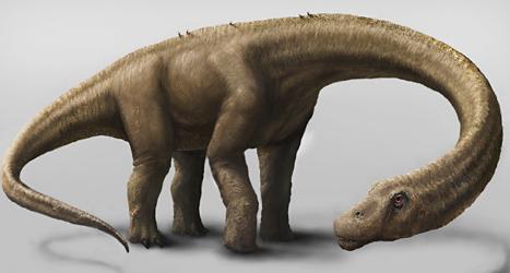 Så här såg världens största dinosaurie ut. Foto: Mark A Klingler/TT.