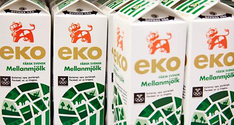 Mjölk kan öka risken för att bryta benet, säger forskare. Foto: Fredrik Person/TT.