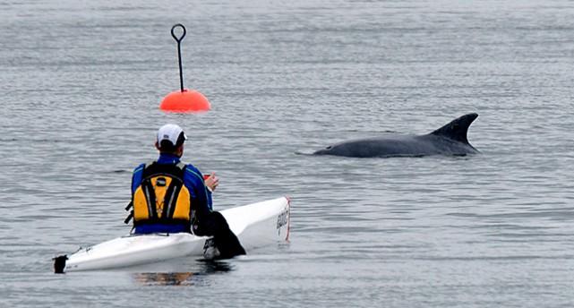 En man i kanot tittar på delfinen i Östersjön