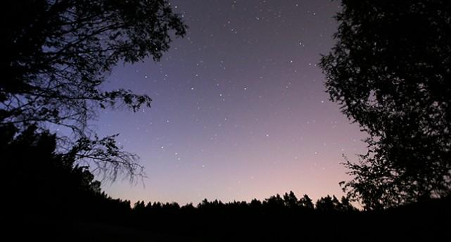 En natthimmel med många stjärnor. Himlen är blå och svagt rosa. Stjärnorna syns som små gula prickar på himlen. Bilden ramas in av mörk skog.