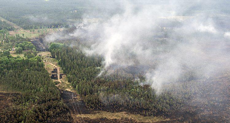 Rök stiger upp från en skog