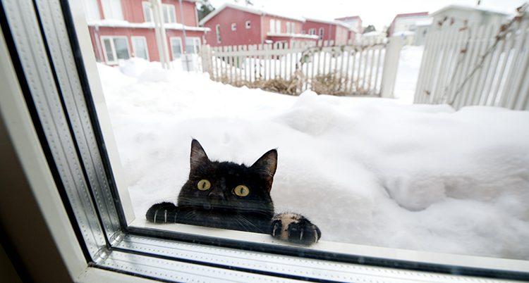 En katt tittar in genom ett fönster på vintern.