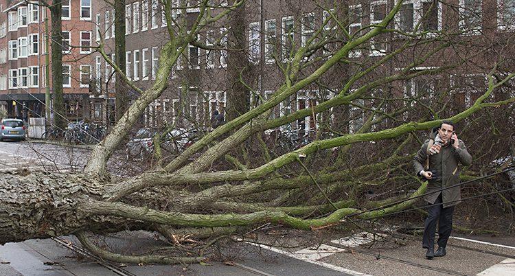 Ett träd blåste omkull i Amsterdam