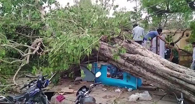 Många träd blåste omkull