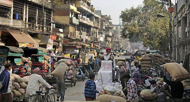En gata i New Delhi