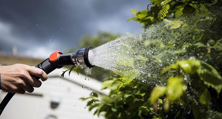 En vattenslang sprutar vatten på en buske.