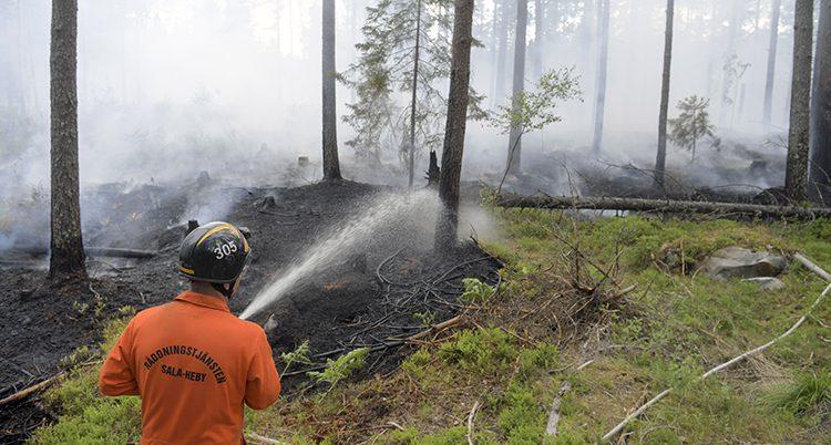 En brandman sprutar vatten på träd i en bränd skog.