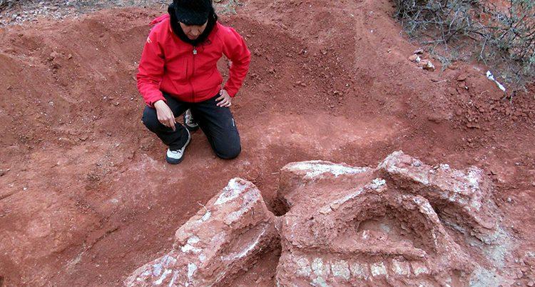 Forskare gräver från skelettet av dinosaurien