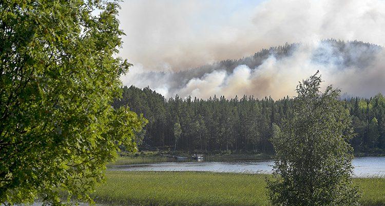 Det brinner i skogen