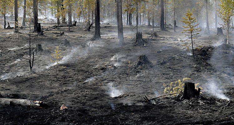 Skog som brunnit i Älvdalen