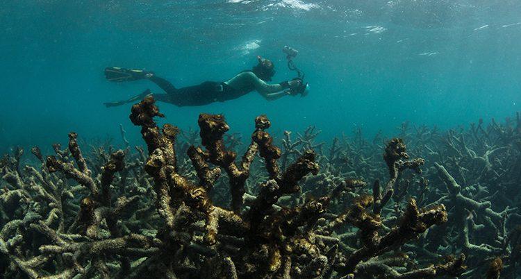 En dykare vid ett korallrev