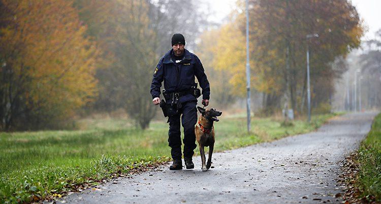 En polis och en hund går på en väg.