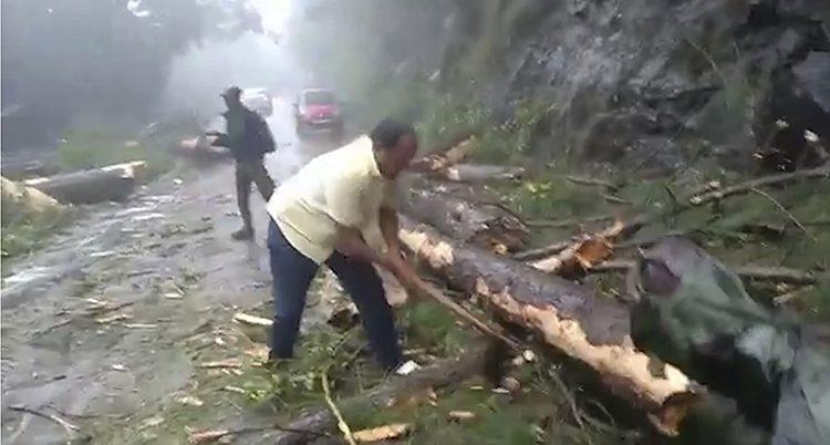 Träd har fallit över en väg.