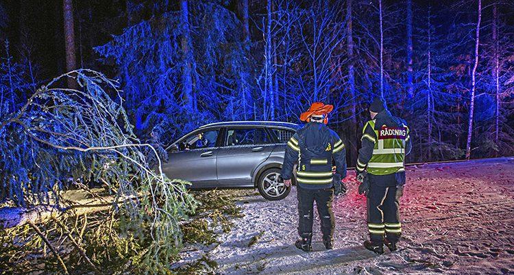 En bil har krockat med ett nedfallet träd
