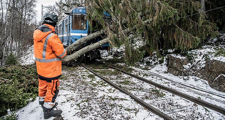Träd över ett järnvägsspår