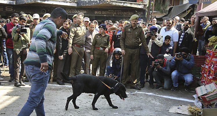 En polis med hund