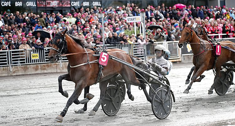 Hästar springer på banan på Solvalla.