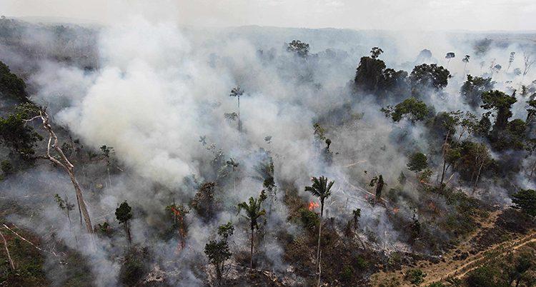 Ett foto som är taget från luften. Foto är taget i Amazonas. Det kommer mycket rök från marken och från träden. Det syns också lågor av eld.