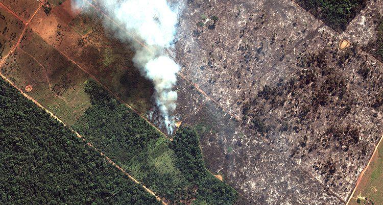 Halva bilden är täckt med gröna träd, andra halvan är utbränd. Röken stiger från en plats mitt på bilden. Bilden tagen uppifrån.