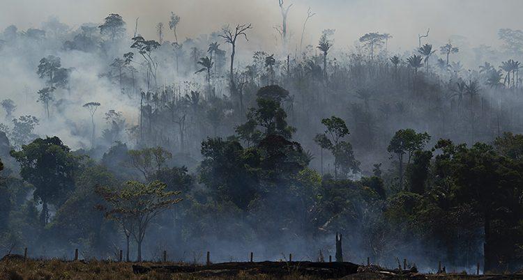 Rök bland stora träd.