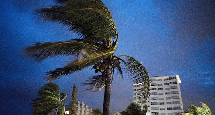 En palm blåser i vinden. Himlen är mörkt blå och flera stora hus syns i bakgrunden.
