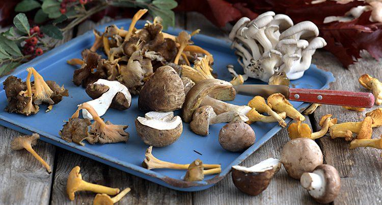 En bricka med svampar i olika färger