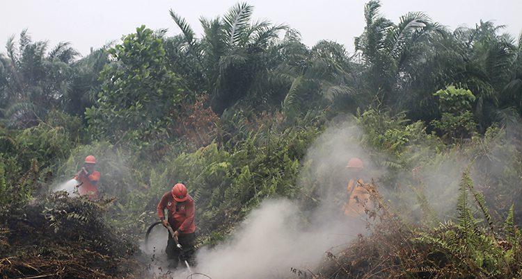 Brandmän försöker släcka en brand i regnskogen i Indonesien.