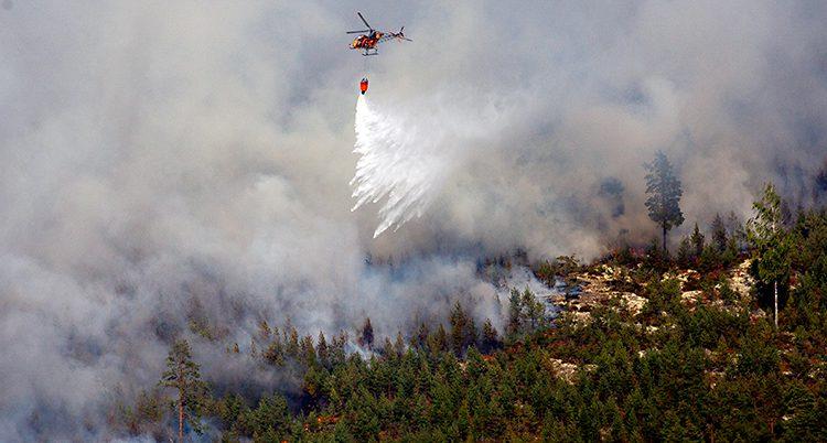 En helikopter släpper vatten över en brand i skogen. Det kommer väldigt mycket rök från branden.