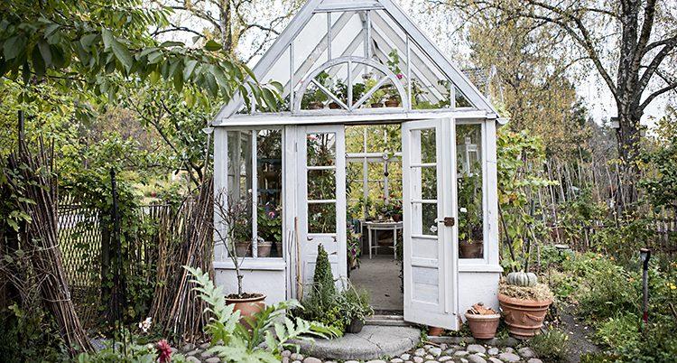 En växthus i en grön trädgård