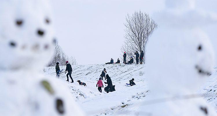Några människor åker pulka i en backe. Allt är täckt av snö.