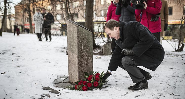 Löfven siter på huk och rättar till en buket med rosor framför stenen.
