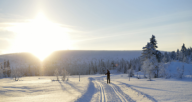 Det är snö överallt. En person åker längskidor. Solen skiner. Några granar med snö på syns.