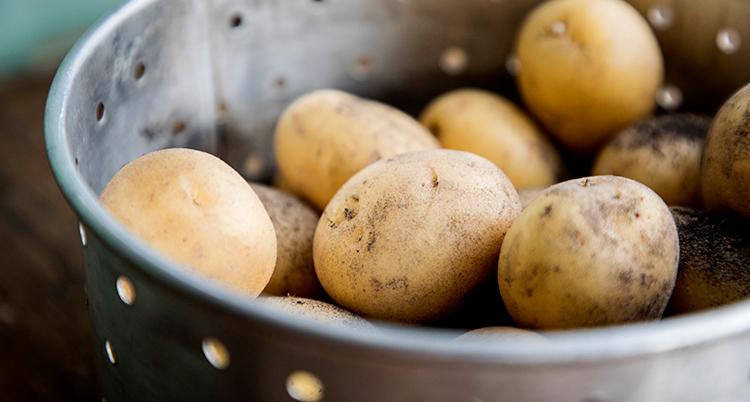 Små potatisar ligger i ett durkslag av metall